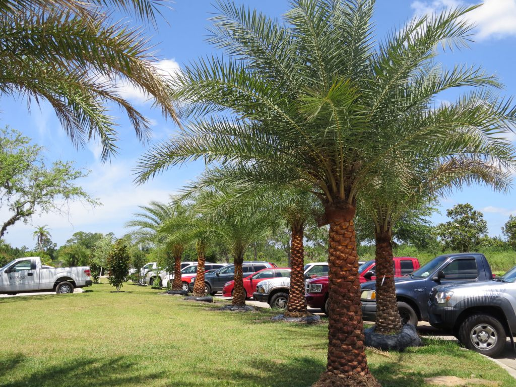 Palm Coast Garden Center | Plants, Palms, Trees Pottery, Water Features