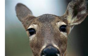 Deer Resistant Featured Image