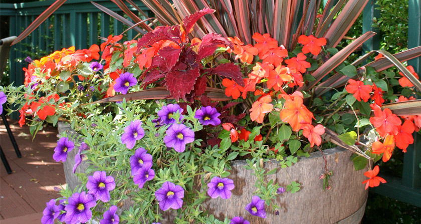 Container Plantings Featured Image