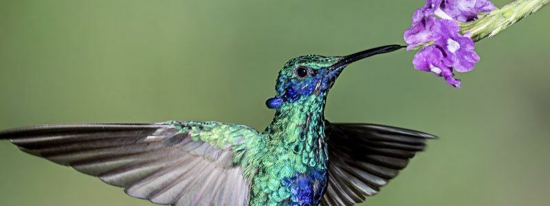 Hummingbirds are BACK! Featured Image