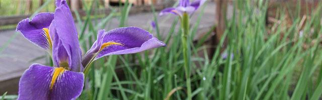 Poisonous Plants Featured Image