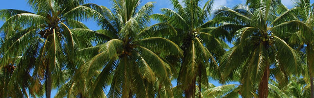 Plant of the Week: Container Palms Featured Image