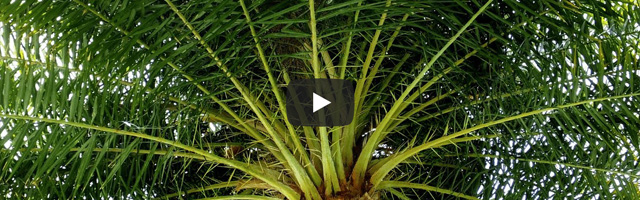 How To: Growing Palms Featured Image