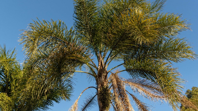 Palm Selection & Care Featured Image