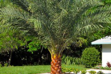 North Florida Plants Palms Trees Shrubs Semi