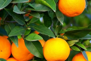 Citrus & Fruit Featured Image