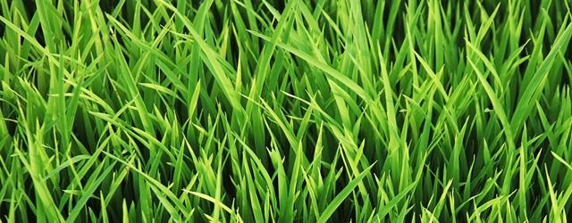 Lawn Maintenance & Calendar Featured Image