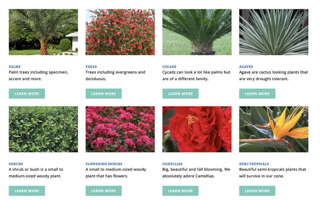 Plant Library Featured Image